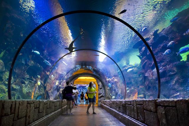 5 motivos para você visitar o mandalay bay viagem sem bagagem